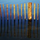 Reflections of wooden posts in a lake by David Carton