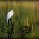 Early Morning Egret by DottieDees