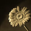 Flower With A Twist  by davesphotographics