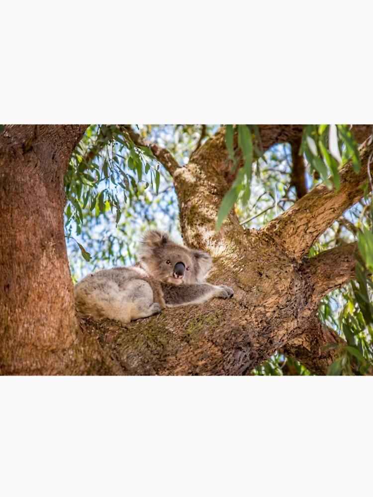 Chilling Koala by aiinojani