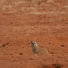 Big eyes for a small mongoose by Owed To Nature