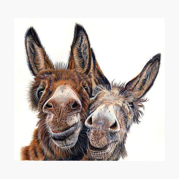 Donkeys - Hee Haw Photographic Print