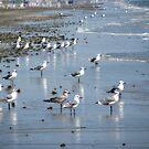 A Sea of Shorebirds by DottieDees