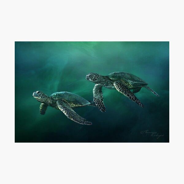 Ocean Flight Photographic Print