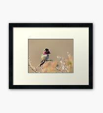 Hummingbird Perched Framed Print