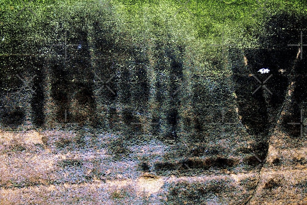 Spirit of Black Forest by richman
