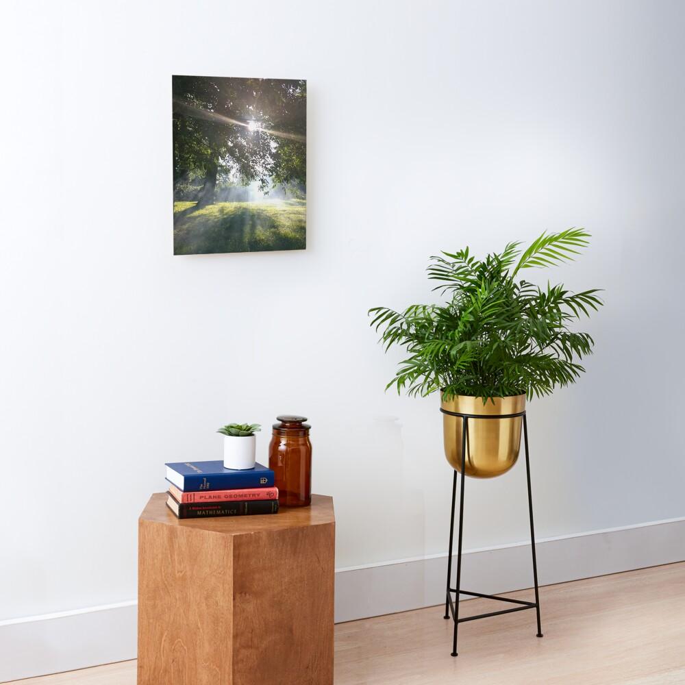 M.I. #12 |☼| Smoky Tree Sun Rays - Portrait Shot (Pearson Park) Mounted Print