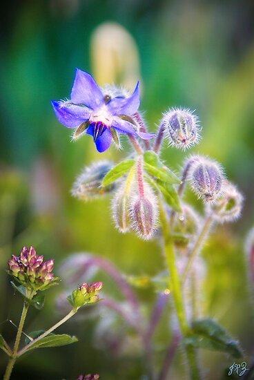 Purple fuzzy flower posters by james zickmantel redbubble purple fuzzy flower by james zickmantel mightylinksfo