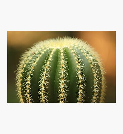 Green Cactus! Photographic Print
