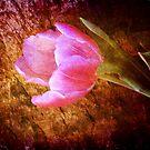 Pink Tulip by Susanne Van Hulst