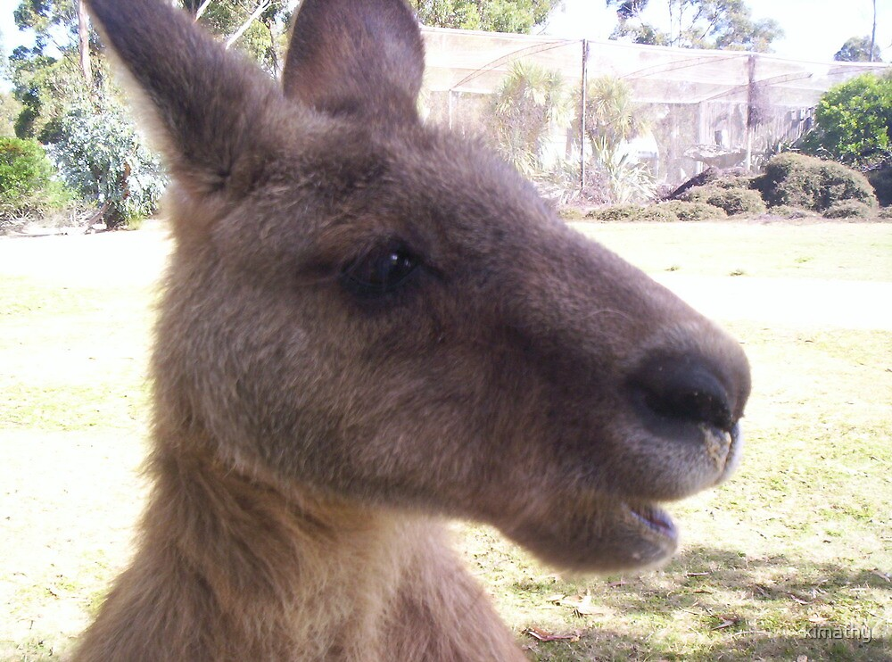 Mr Skippy, Bicheno, Tasmania by kimathy