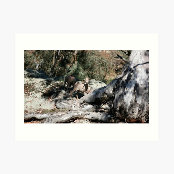 farmscapes #24, well rooted  Art Print