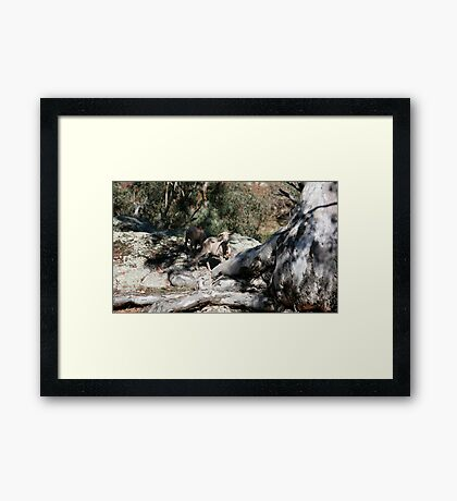 farmscapes #24, well rooted  Framed Print