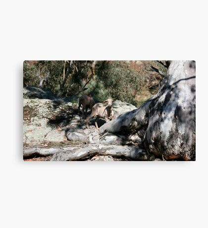 farmscapes #24, well rooted  Canvas Print