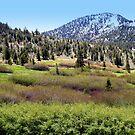 """""""High Sierra Meadow"""" by Lynn Bawden"""
