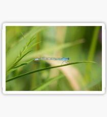 Damsel In Blue Sticker