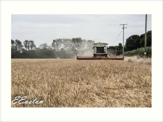 Combine Harvester in Norfolk by Eleanor Easton