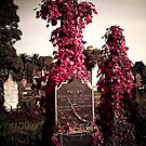Rookwood Flowers by Boadicea