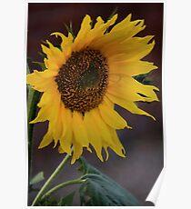 Solar Petals Poster