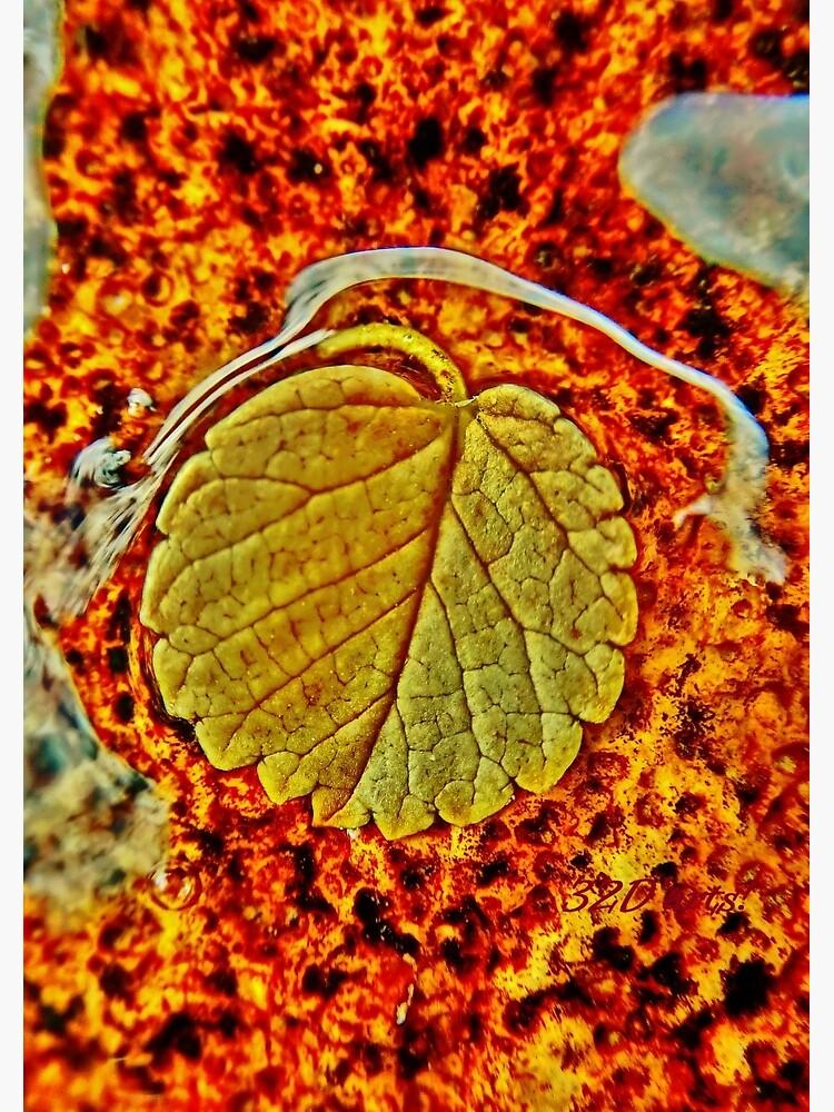 Floating Leaf by 32DARTS