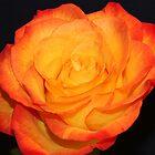 Orange Glow by Rachel Stickney