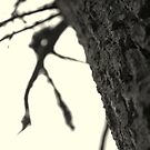 Tree Trunk by AbsintheFairy