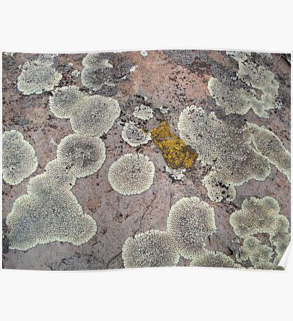Lichens on Montana Granite Poster