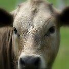 Soft Cow... by Sandra Cockayne