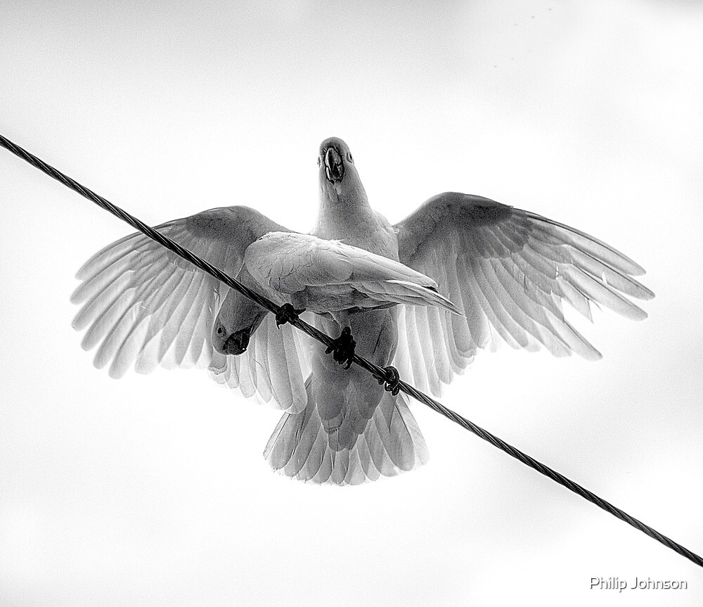 Variation On A Theme Of Cockatoos - The HDR Monochrome Experience by Philip Johnson