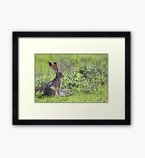 Tortoise and the Hare Framed Print