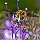 Pollination 17 by Gareth Jones