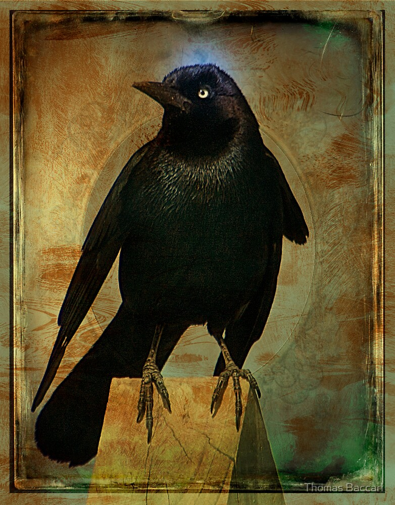 The Crow by TJ Baccari Photography