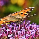 Butterfly by Gareth Jones