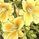 Yellow Day Lillies by Anne Sainz