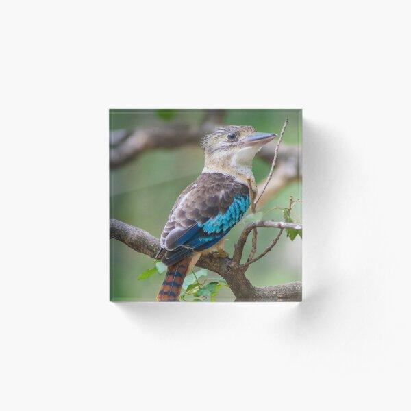 Blue-winged kookaburra Acrylic Block