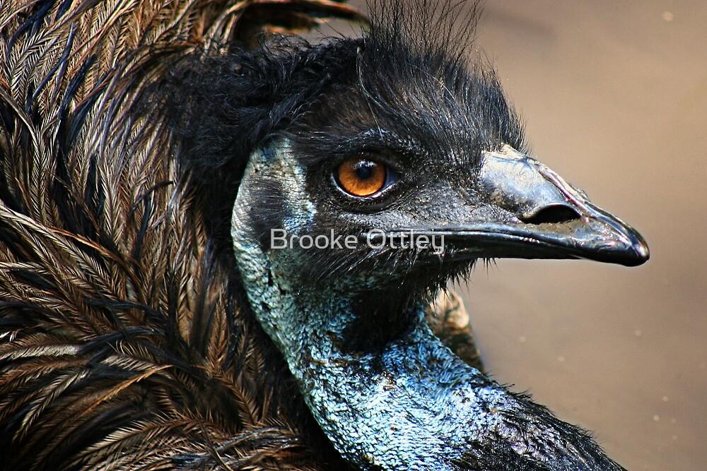 Emu mud bath by Brooke Ottley