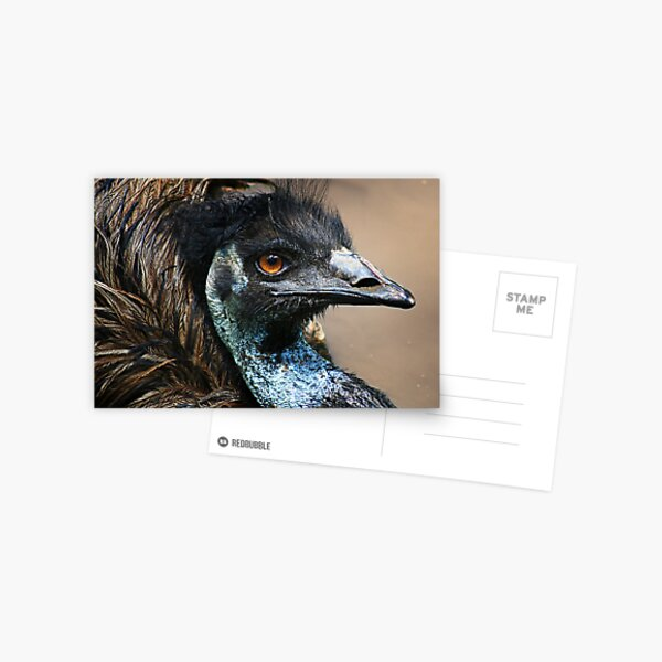 Emu mud bath Postcard