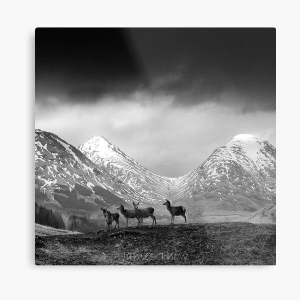 In the hills Metal Print
