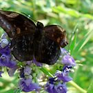 Fairy Butterfly by catherinemhowl