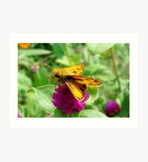 Tiny Yellow and Tan Butterfly Art Print