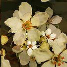 Alhambra Blossom IV by BigFatArts