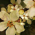 Alhambra Blossom III by BigFatArts