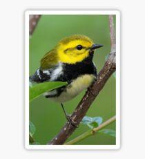 Black-throated Green Warbler Sticker