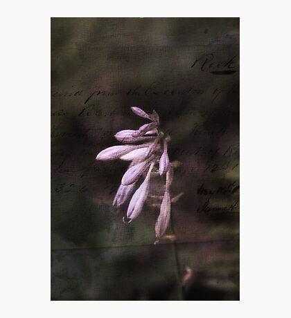 Old Postcard Hosta Flowers Photographic Print