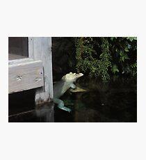 Albino Photographic Print