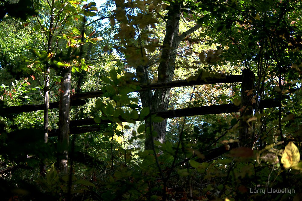 All Fenced In.... by Larry Llewellyn