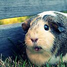Einstein Pig by Caity H