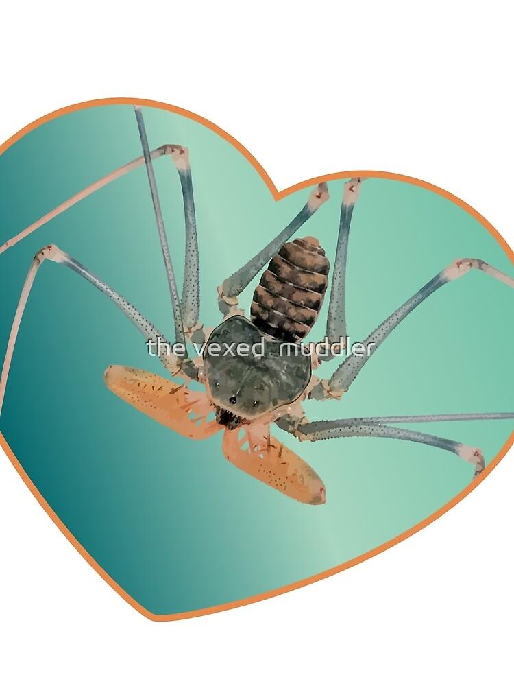Amblypygi love - Acanthophrynus coronatus by thevexedmuddler