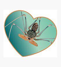 Amblypygi love - Acanthophrynus coronatus Photographic Print