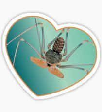 Amblypygi love - Acanthophrynus coronatus Glossy Sticker